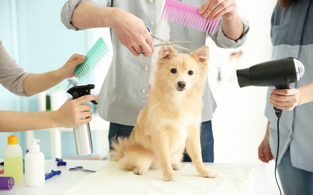 choosing the best grooming service online