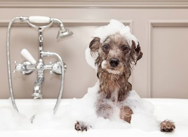 Mobile dog grooming Pinecrest
